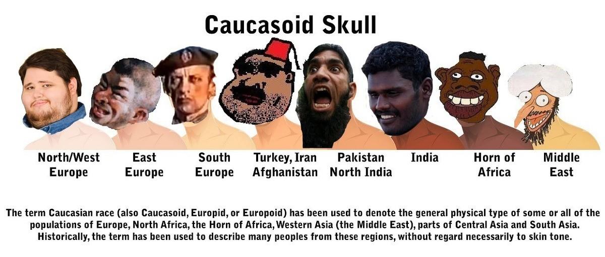 Caucasoid Skull Related Keywords & Suggestions - Caucasoid Skull Long ...
