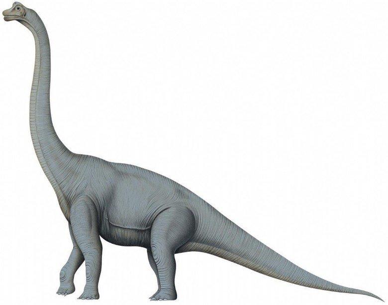брахиозавр картинка на белом фоне