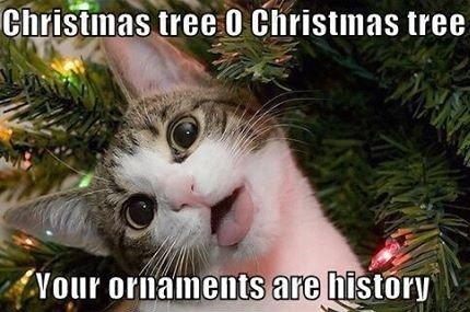 christmas cats - Merry Christmas Cat