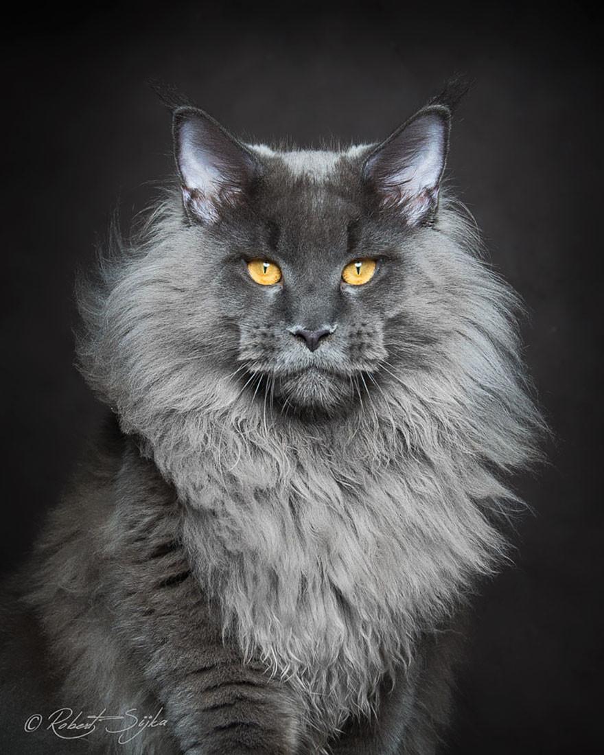 Cool Cat Breeds 2018 Funny Cats