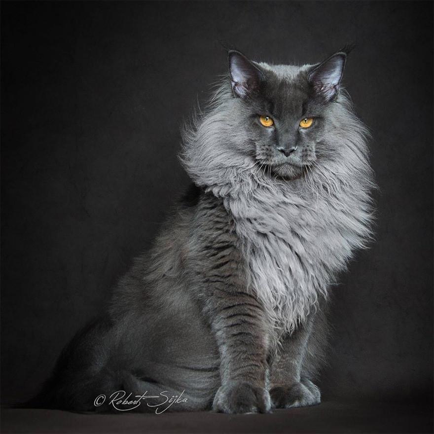 Worksheet. Lynx Cat