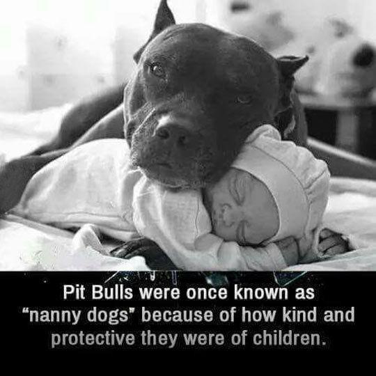 nanny dogs