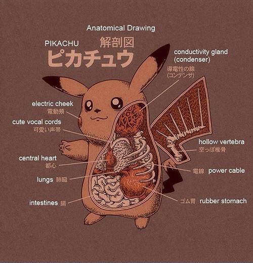 Pokmon Anatomy